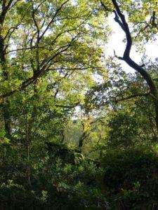 nature santé