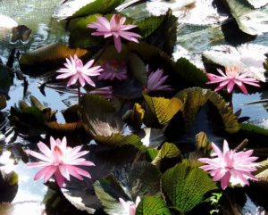 harmonie plante