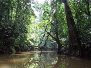 porte jungle